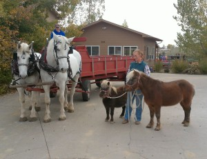 Our minis Tabby and Louie go to meet the Percheron Drafts Jill and Orion
